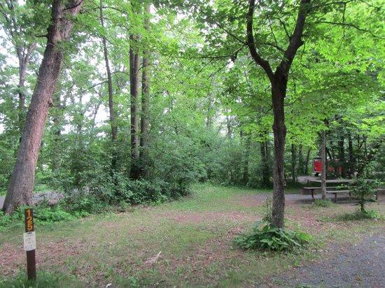 William O'Brien State Park: trees around the campground