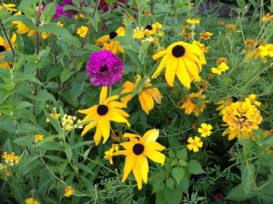 Summertime: nice flowers