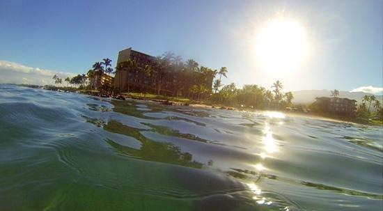 Mana Kai Maui: snorkeling just off the beach