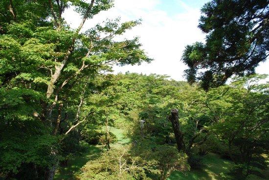 Kakumeikan Matsuzakaya Honten: 庭