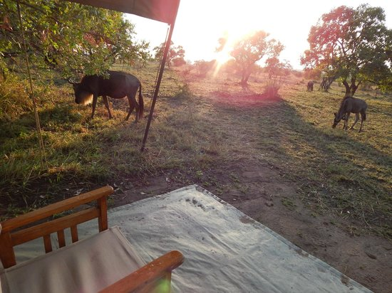 Ubuntu Camp, Asilia Africa: Morning visitors outside of my tent!