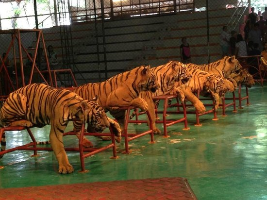 开放时间 - Picture of Sriracha Tiger Zoo, Chonburi - TripAdvisor