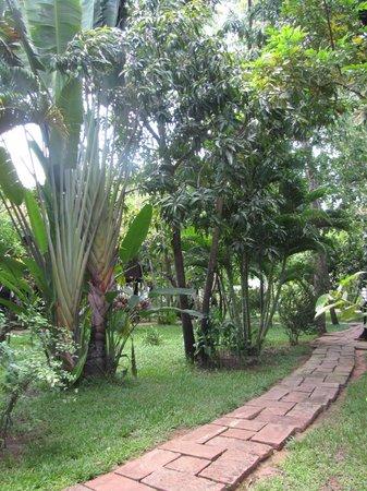 SiZen Retreat & Spa: Greenery on the premises