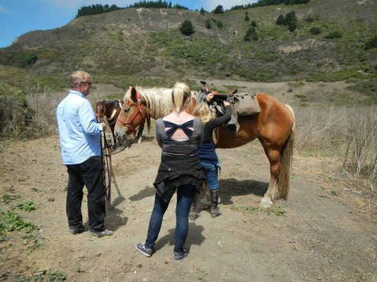Five Brooks Stables : Getting Delilah ready for riding after lunch