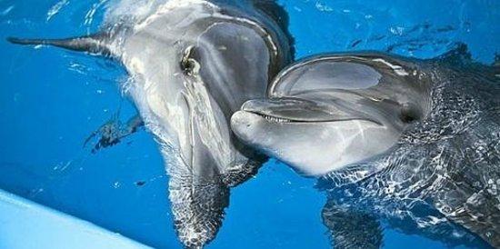 Kharkov Dolphinarium: =)