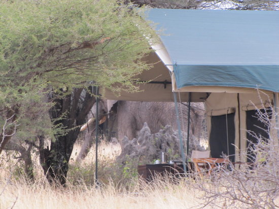 Manyara Ranch Conservancy: One of our guests near the tent