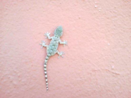 Casale La Sterpaia: Uno dei piccoli gechi che si trovavno sulle pareti dell'albergo