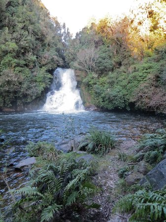 Black Fern Lodge: Kawauariki waterfall about a km from Blackfern.