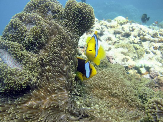 Fiji Photos