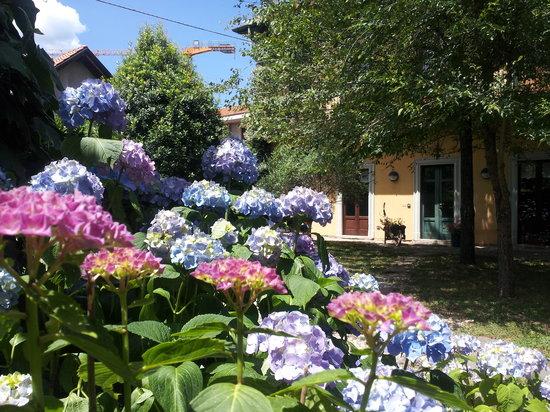 B&B I Due Noci: flowers at iduenoci
