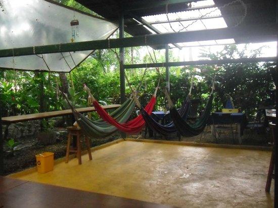 Tucan Hotel : Algunas de las hamacas