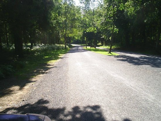 Portumna Forest Park: No Potholes