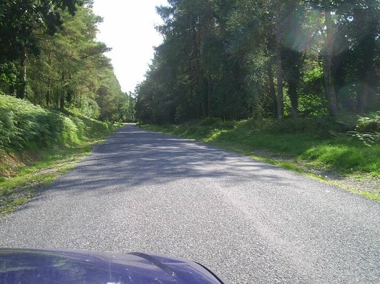 Portumna Forest Park : Driveway