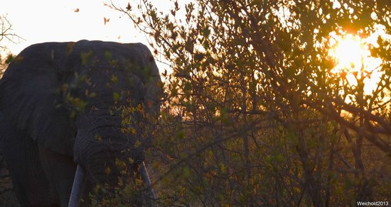 Naledi Bushcamp and Enkoveni Camp: Elephant in the early morning