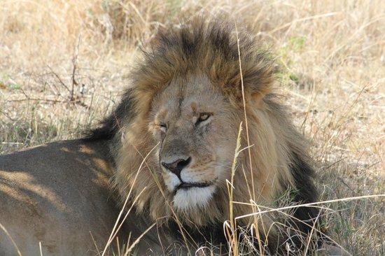 Kenya Incentive Tours & Safaris - Day Tours : le big boss très proche de nous!