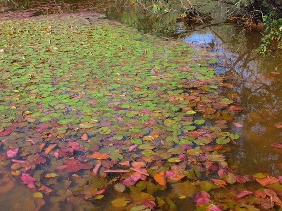 Tra Su Bird Sanctuary: Lotus of the wet land