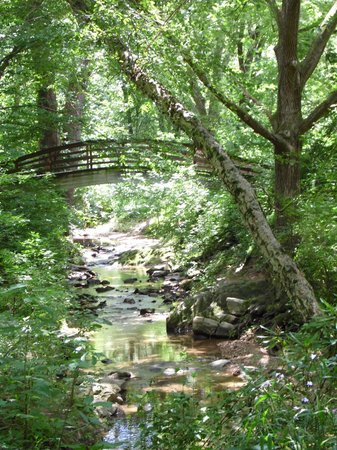 Botanical Gardens at Asheville : Put yourself in this postcard view by standing on the bridge