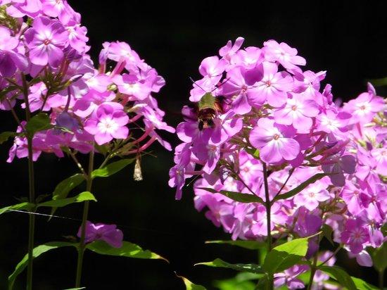 Botanical Gardens at Asheville : Humming Bird Moth