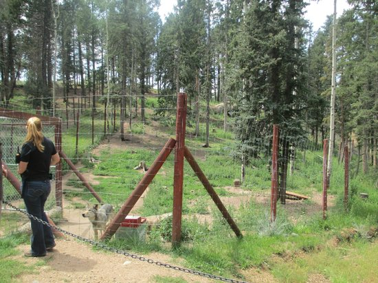 Colorado Wolf and Wildlife Center: Wolf enclosures