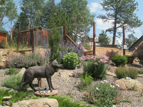 Colorado Wolf and Wildlife Center: The grounds