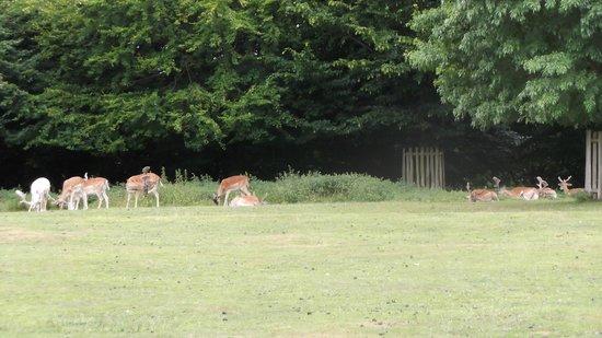 Dunham Massey Hall & Gardens : The deer park