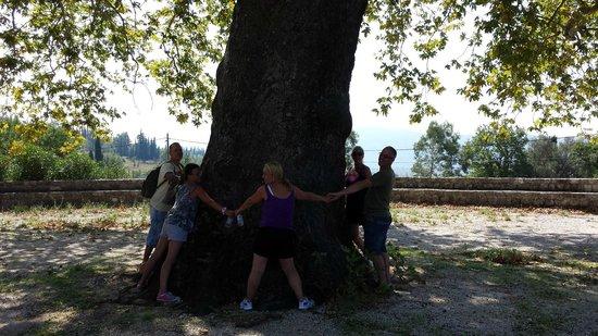 Dubrovnik Adventures: Tree Huggers