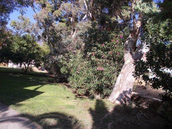 Dionysos Seaside Resort : jardins