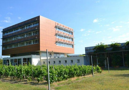 Hôtel de Guyenne : Jardin de l'hôtel