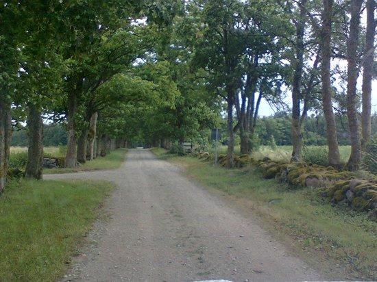 LoonaManor Guesthouse, Vilsandi NP: la strada di accesso