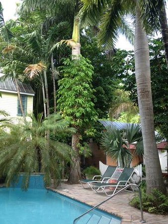 Tropical Inn: The lush garden and pool area