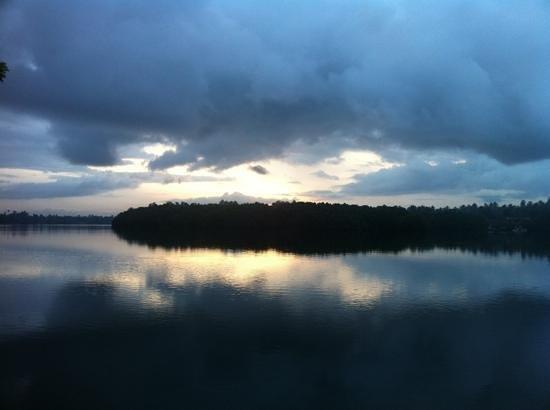 Riverbank Bentota: mangrove forest