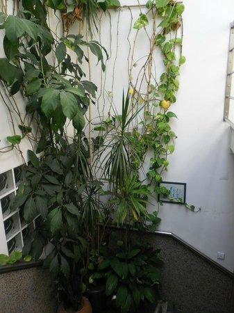 Residencial Moeda : La serra nella scala o viceversa