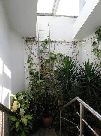 Residencial Moeda : La scala nella serra o viceversa