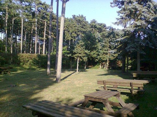 Hotel Schwartz: il bosco