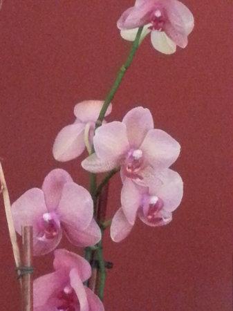 Jinju Korean Restaurant: Orchid