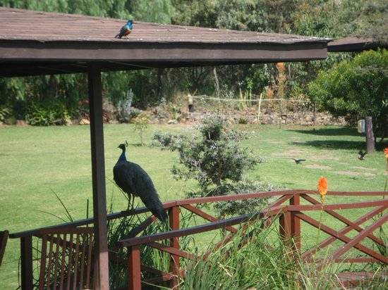 Great Rift Valley Lodge & Golf Resort: Guests at breakfast!