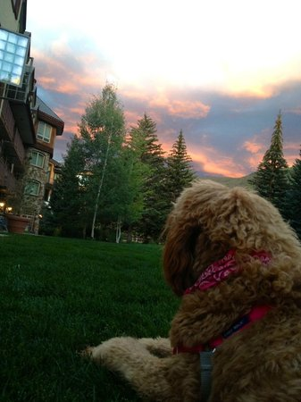 Tivoli Lodge: Edie enjoying the sunset outside our room