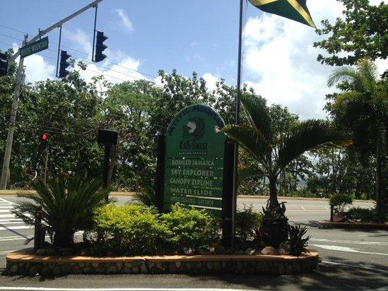 Rainforest Adventures: Entrance