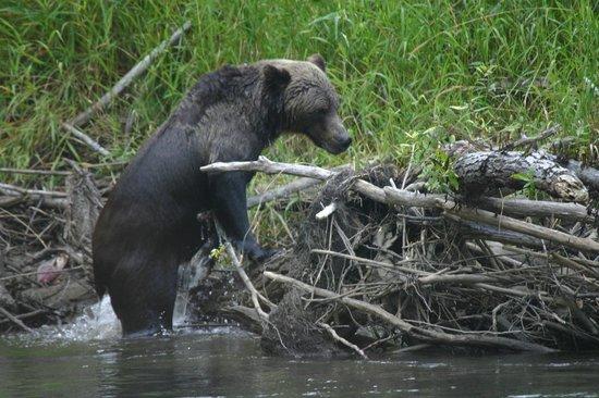 West Coast Nature Day Tours: Bear Viewing Tour