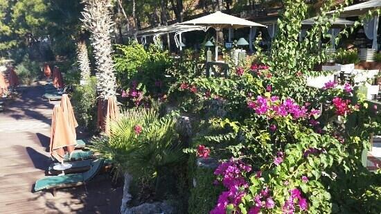 MARTI Hemithea Hotel: garden by the pool