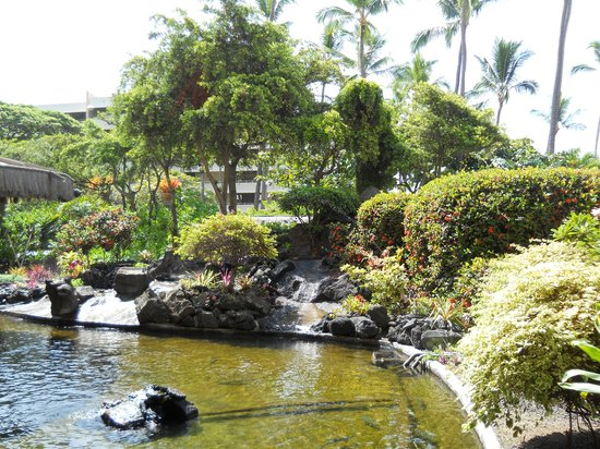 Kona Seaside Hotel : How do you relax?