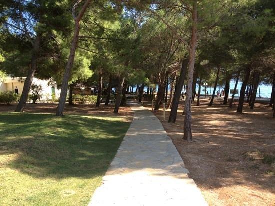 Bluesun Hotel Elaphusa: garden