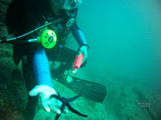 Villa del Palmar Beach Resort & Spa at The Islands of Loreto: Sea star, diving off of Coronado Island