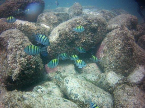 Villa del Palmar Beach Resort & Spa at The Islands of Loreto: Amazing biodiversity, Sea of Cortez