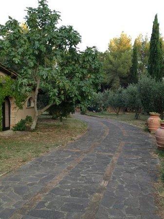 Relais Casale Il Poggetto: viale all'interno del casale