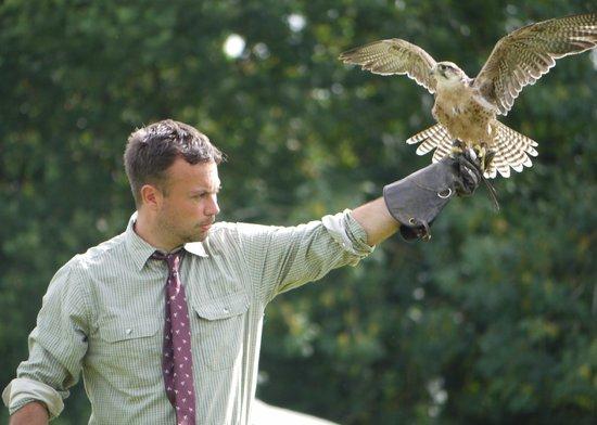 The International Centre for Birds of Prey : Guest speaker Mark Habbon plus falcon