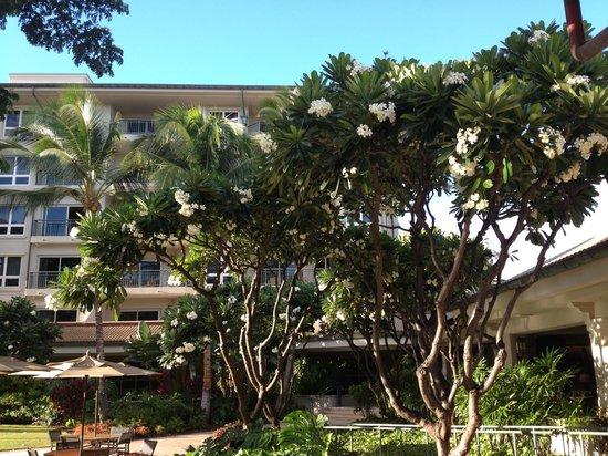 The Westin Kaanapali Ocean Resort Villas: Hotel grounds