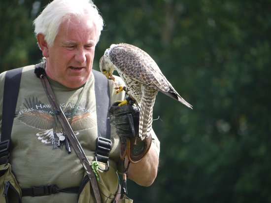 The International Centre for Birds of Prey : Guest speaker Bob Dalton and Sid