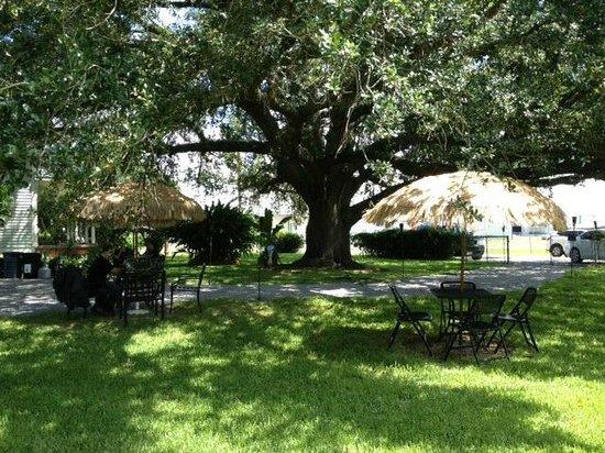 Shade Tree Cafe': Shade Tree Cafe front seating