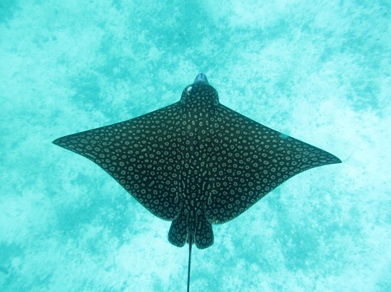 Anda De Wata Tours: Stingray near the reef